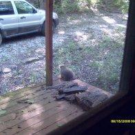 09-15-08  Wildlife