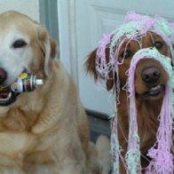 dogs-mischief