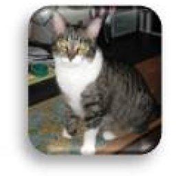 Cat-Adorers!