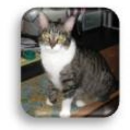 @cat-adorers