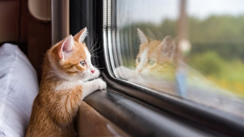 A Brief History of Traveling With Cats