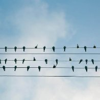 The Bandwagon Effect: Why People Tend to Follow the Crowd - Effectiviology