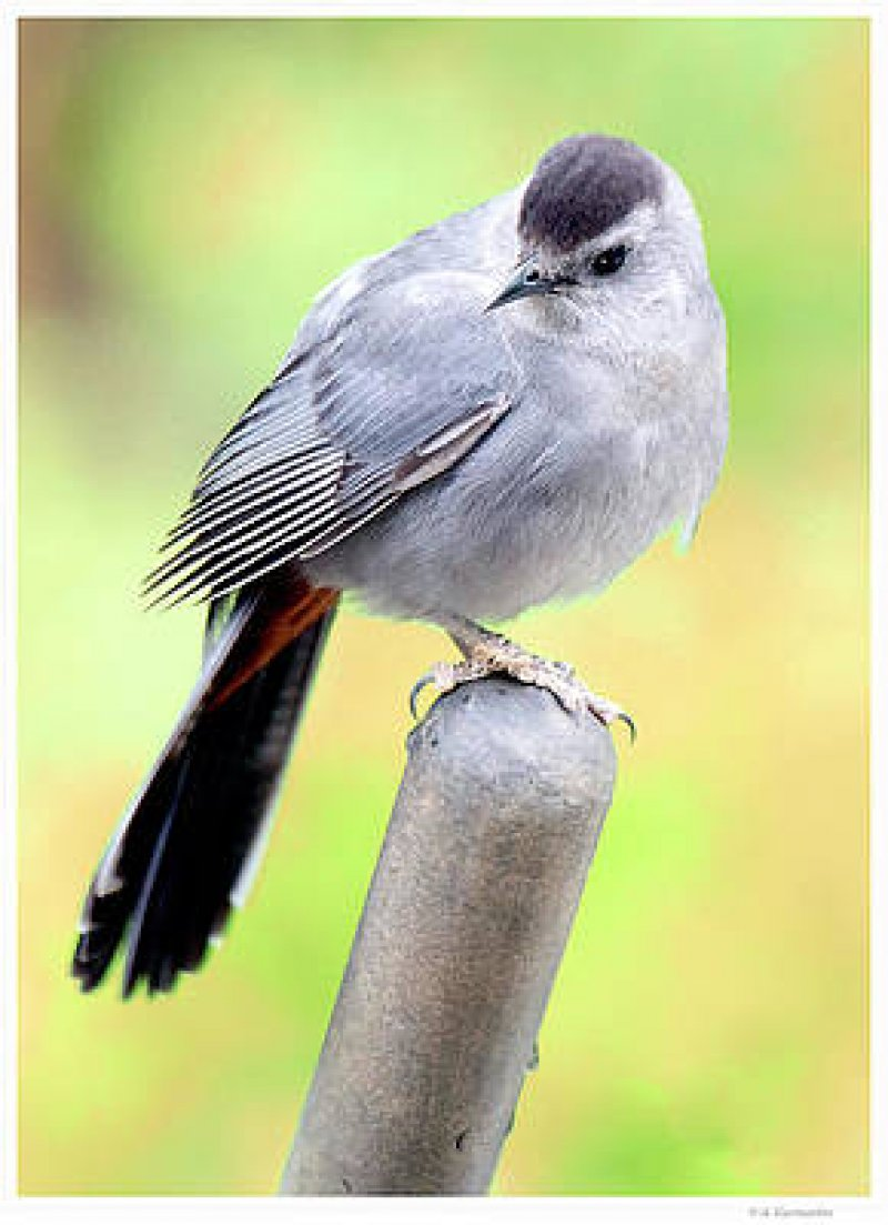 """A """"CATBIRD SEAT"""" of a THREE DAY WEEKEND (Into Monday Morning) ~ Creative Arts Group ~"""