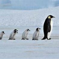 The Problem of Induction - N+1 and Penguins