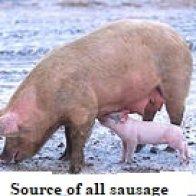 Sausage/Potato Casserole