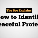 How To Identify A Peaceful Protester | The Babylon Bee