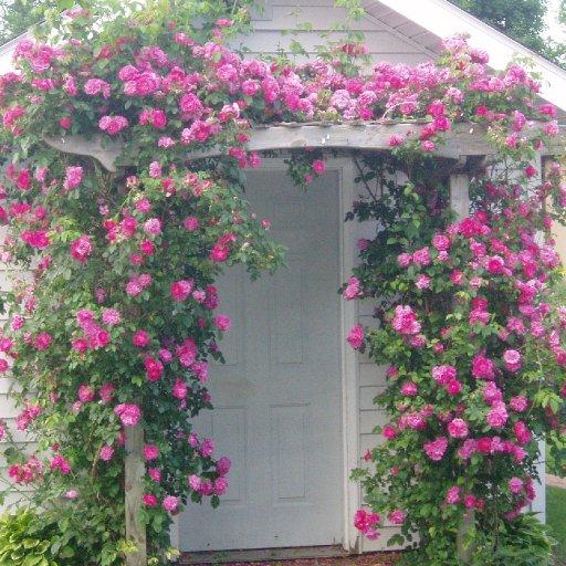 Rose Gardener