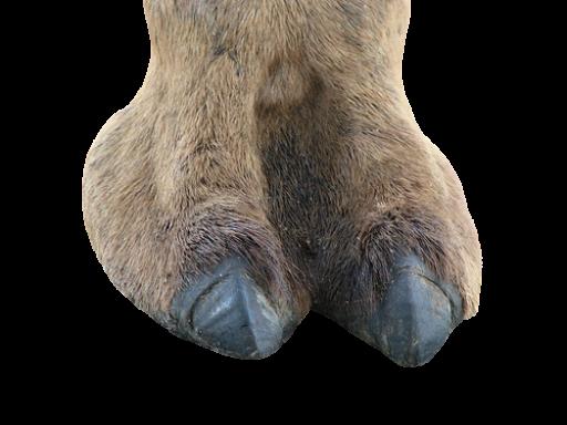Moose Knuckle