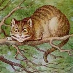 chess cat
