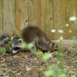 New Neighbor Kid Slinks through My Back Yard